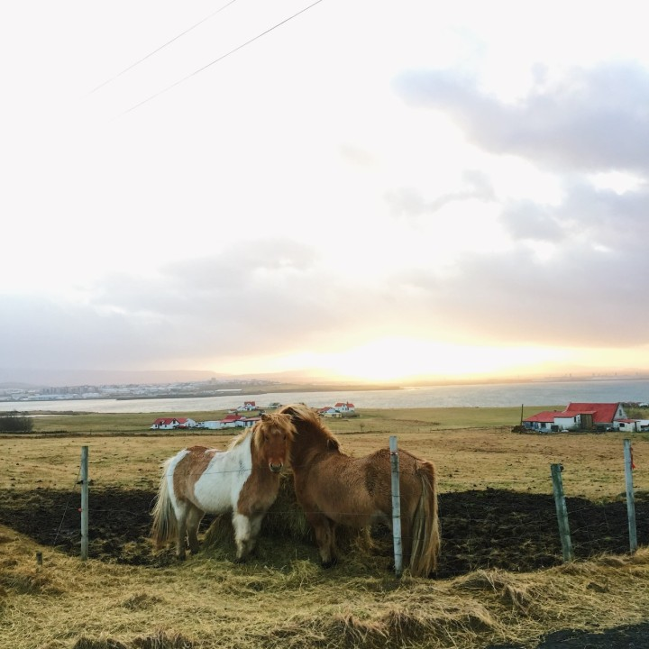 First Day in Iceland